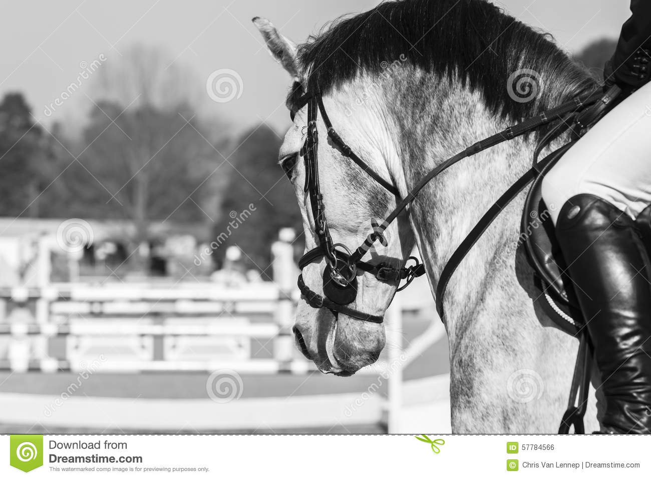 Horse Head Show Jumping Vintage Stock Photo Image Of Vintage Head 57784566