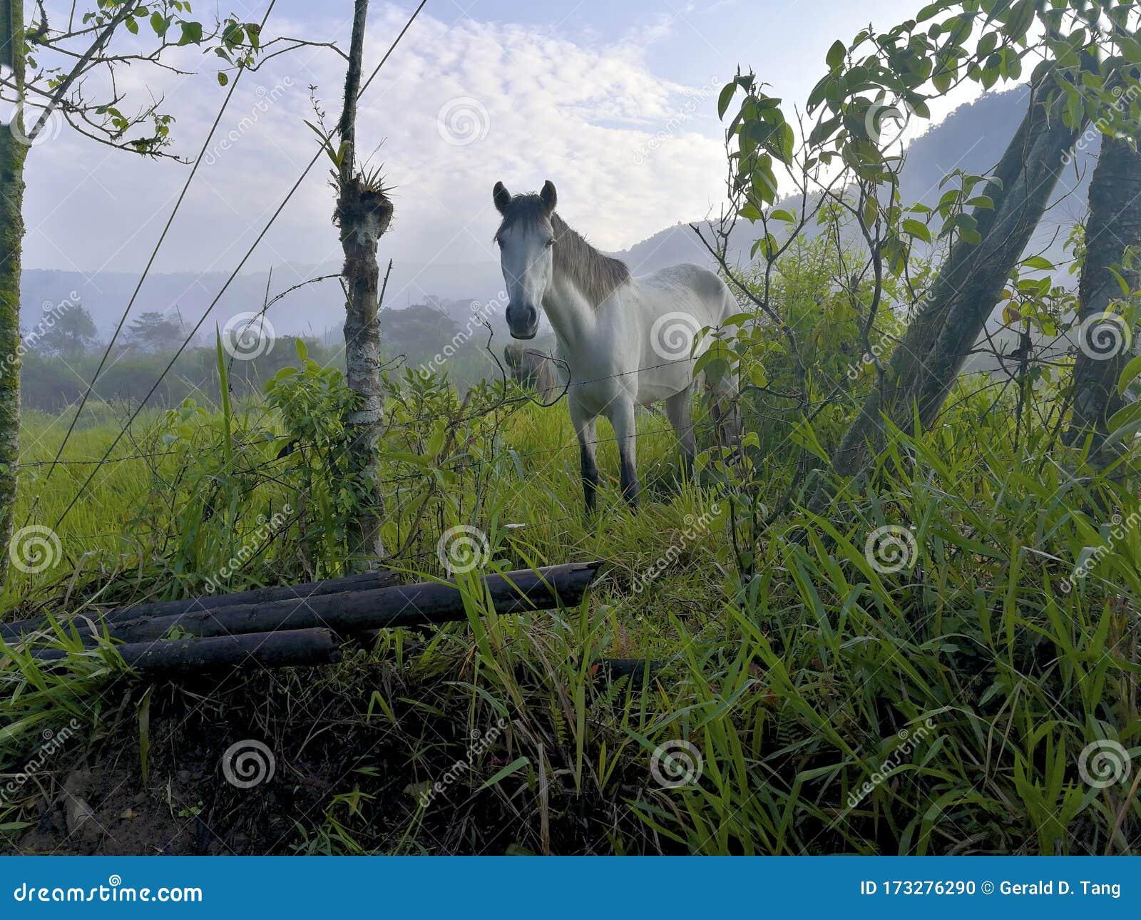 Horse Head On 835132 Stock Photo Image Of Livestock 173276290