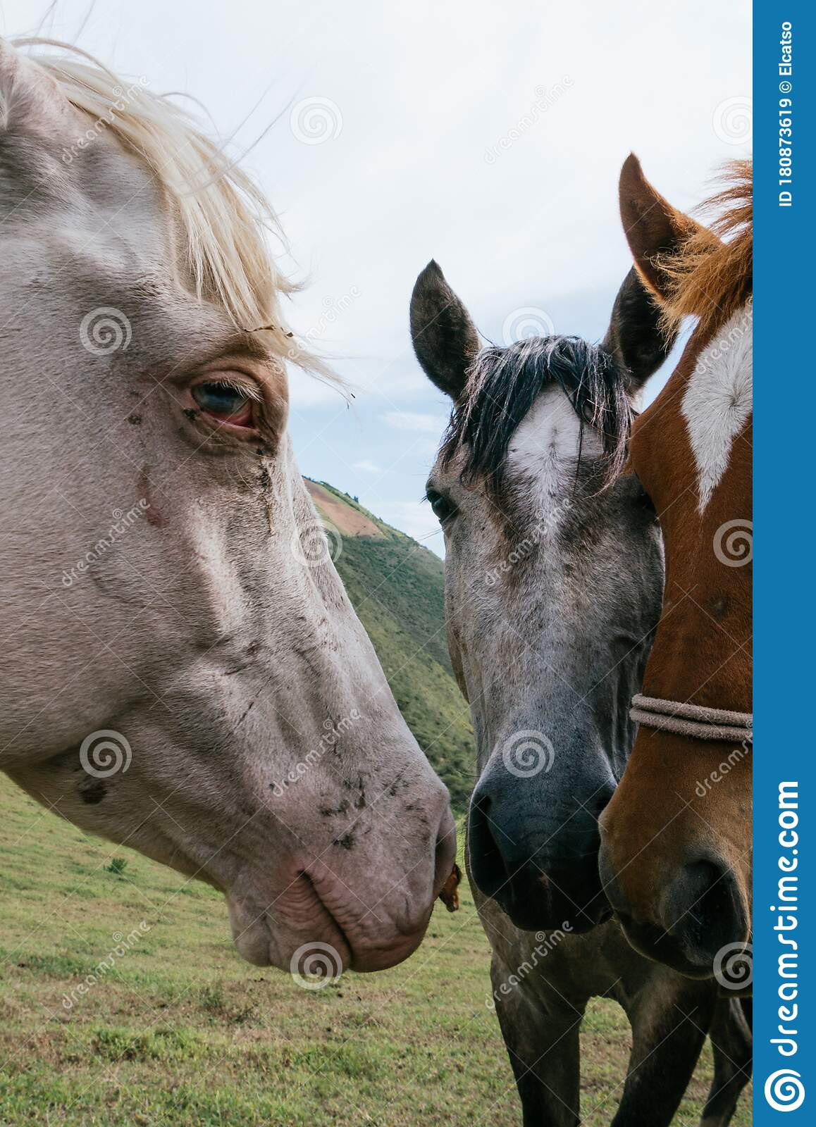 902 Beautiful Horse Heads Photos Free Royalty Free Stock Photos From Dreamstime