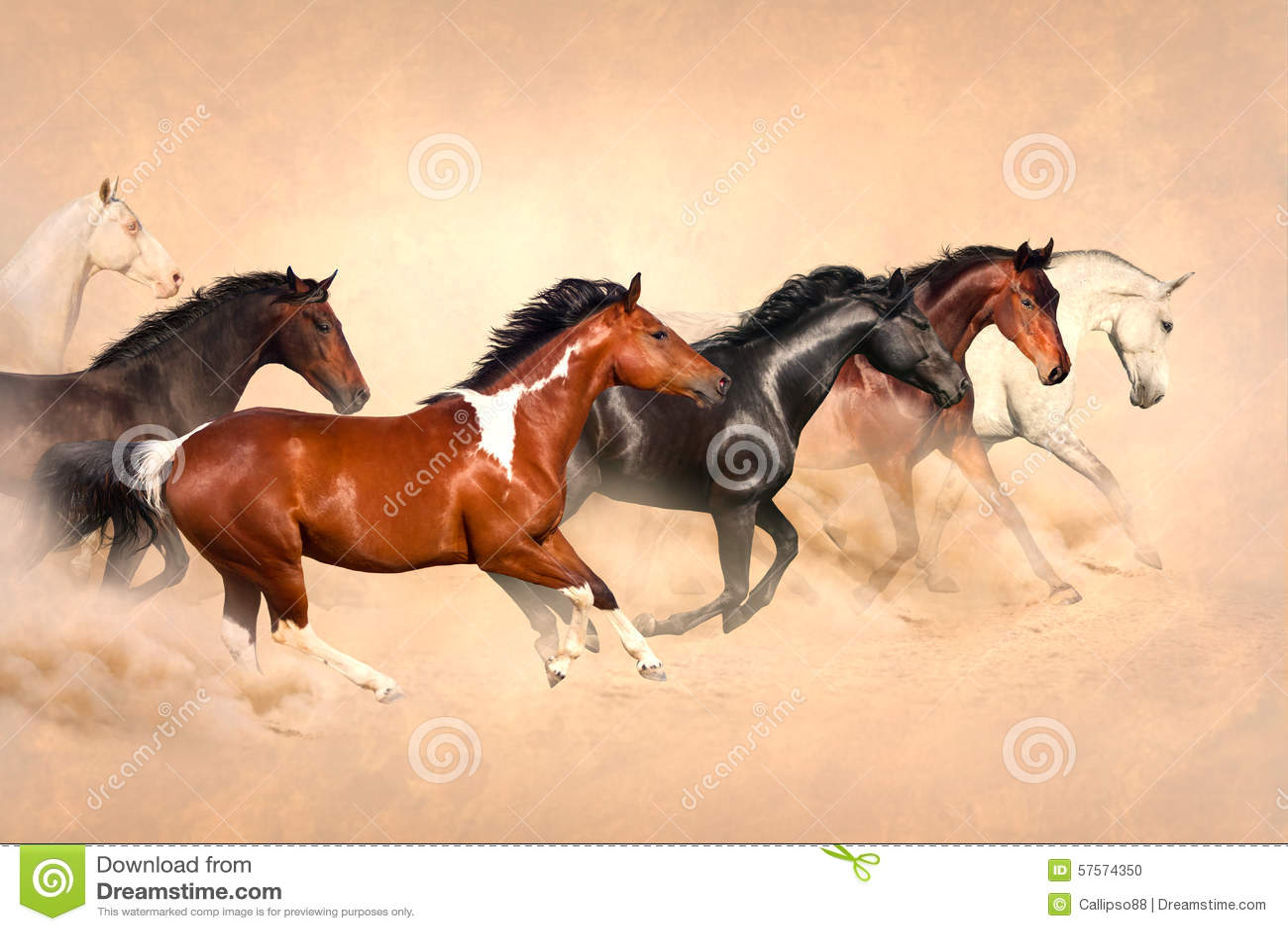 Horse herd in desert