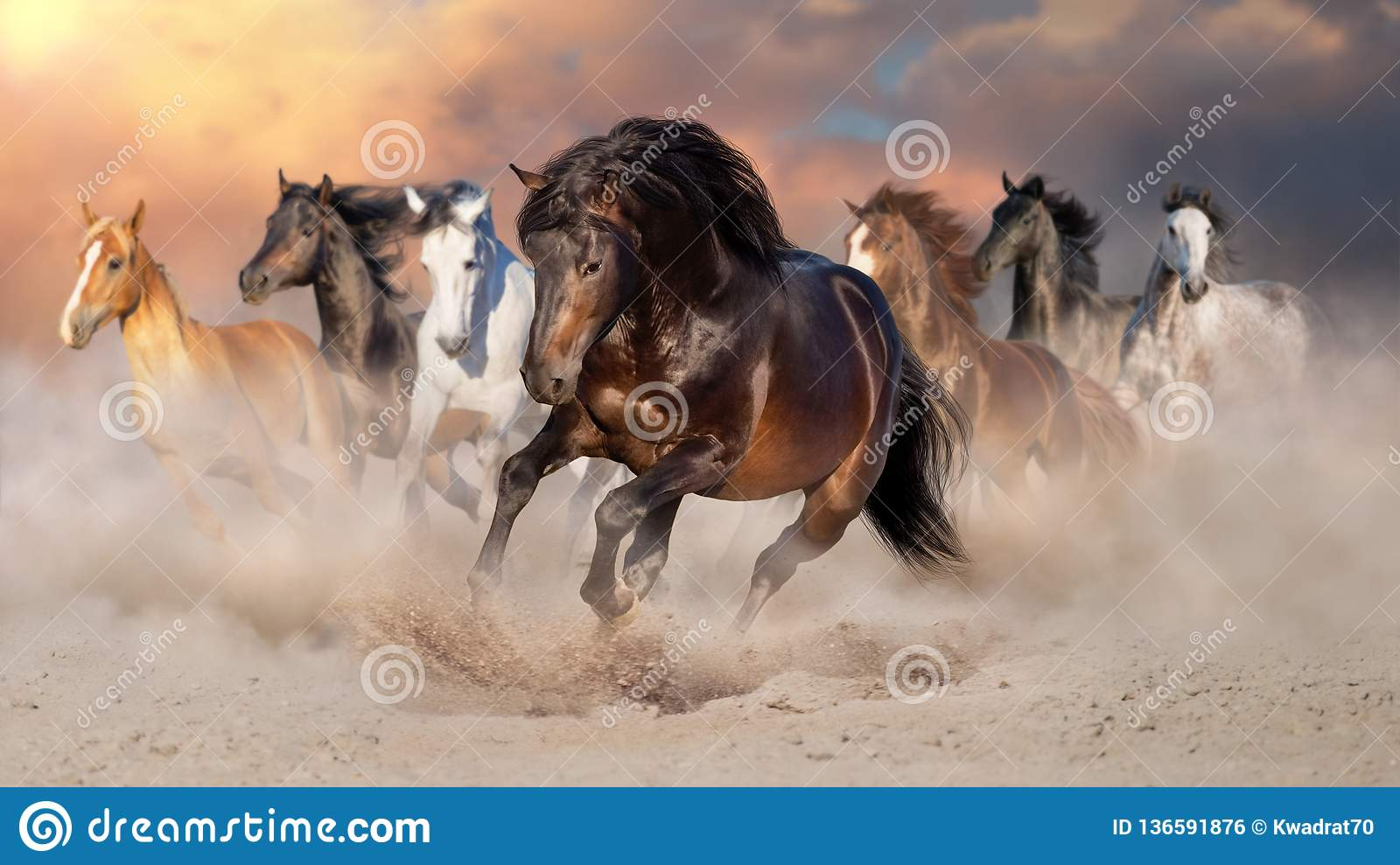 Horse herd run in desert