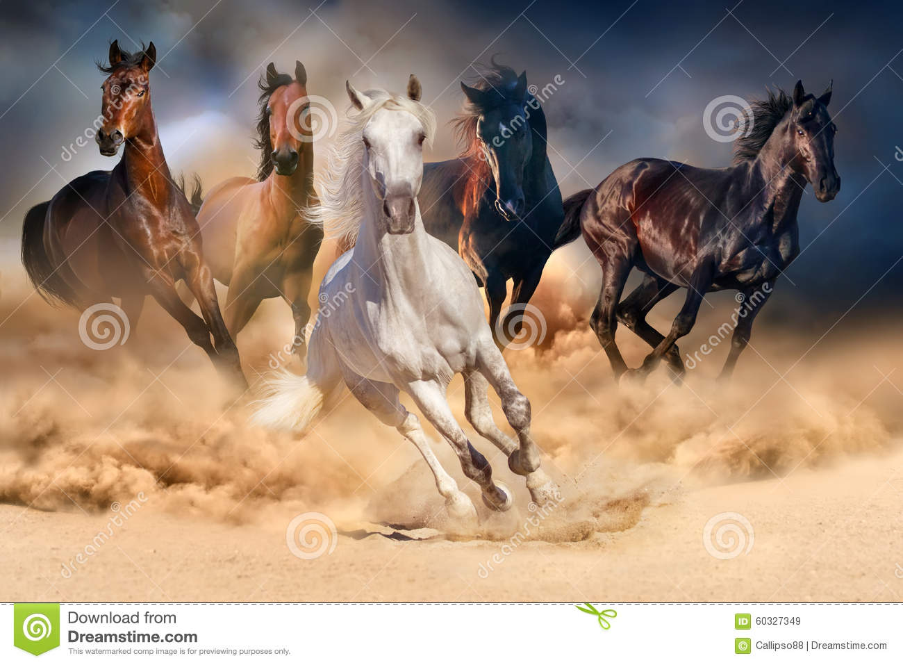 Download Horse herd run stock image. Image of gallop, forward - 60327349