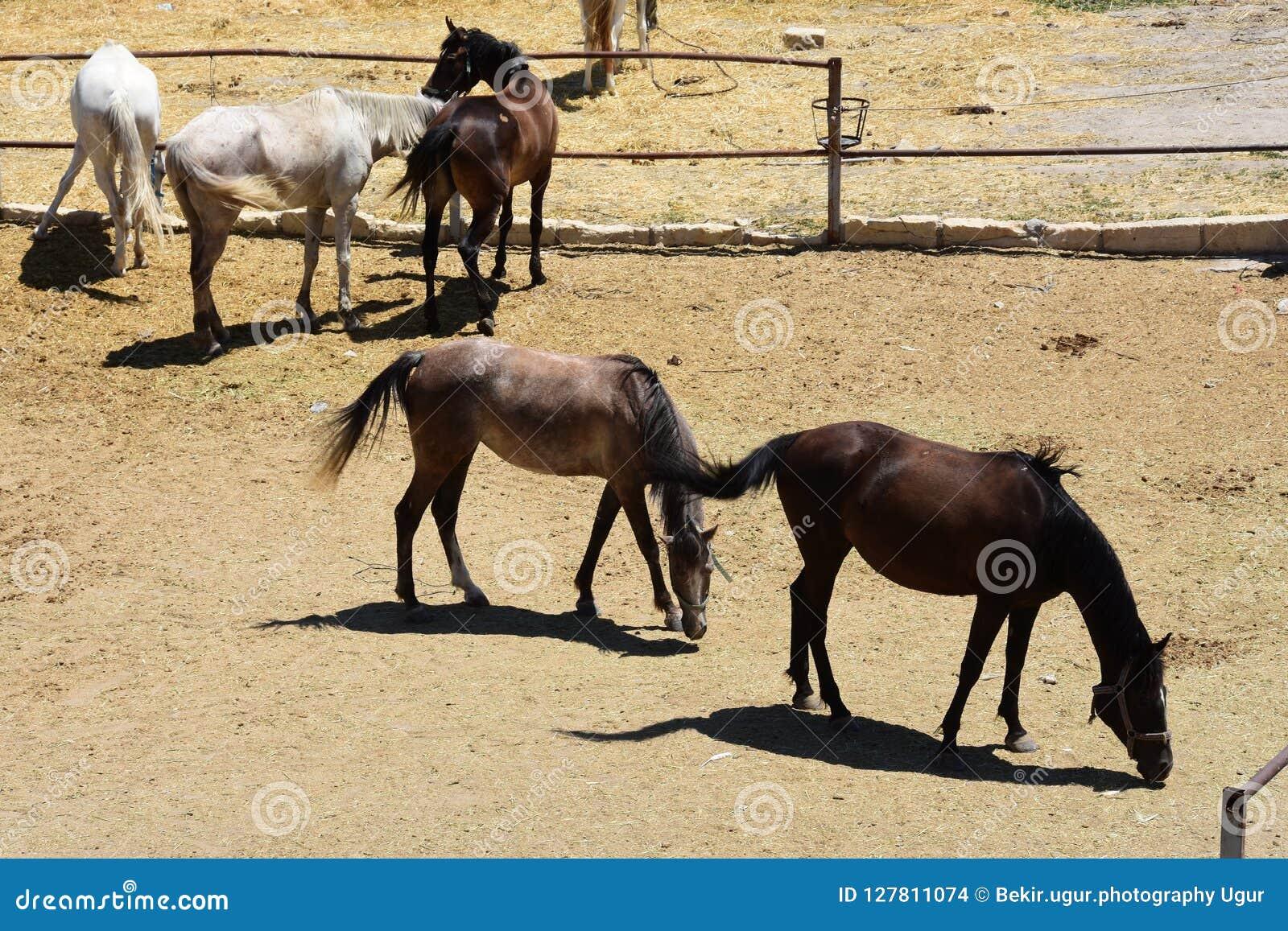 Horse herd run. Gallop, forward