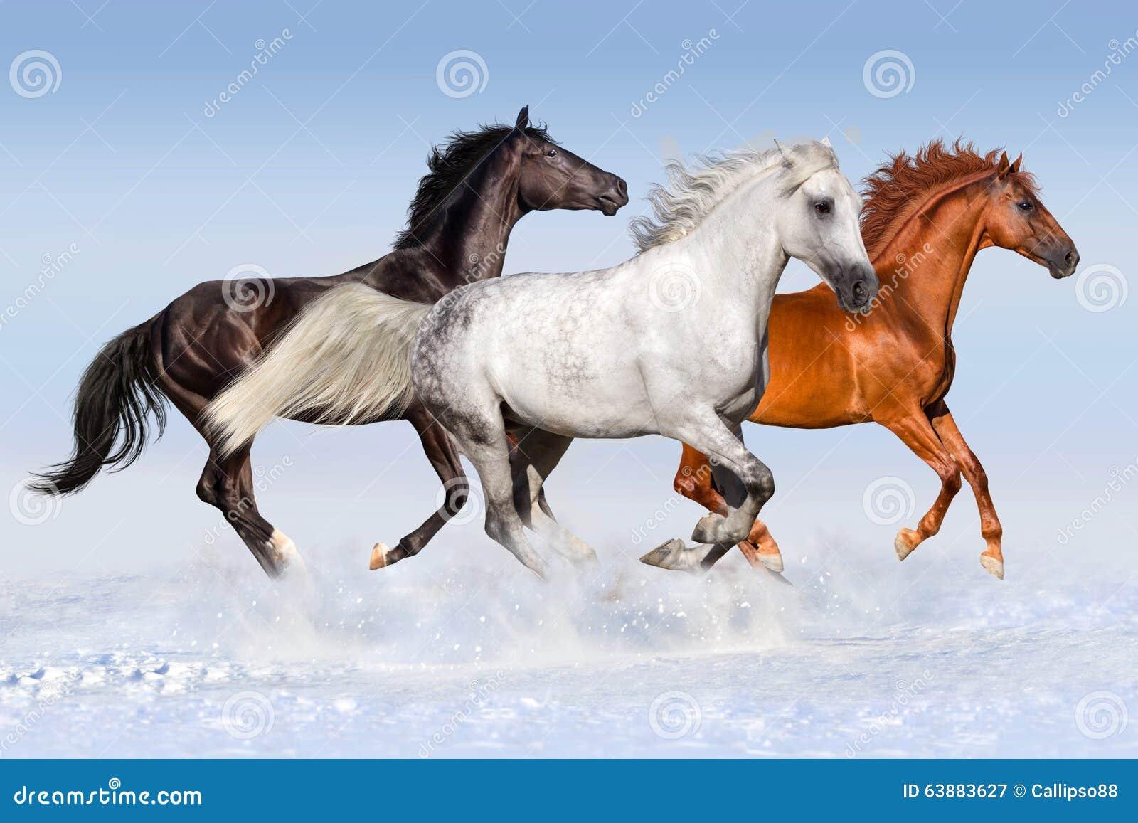 Horse Herd Run In Winter Stock Image Image Of Stallion 63883627