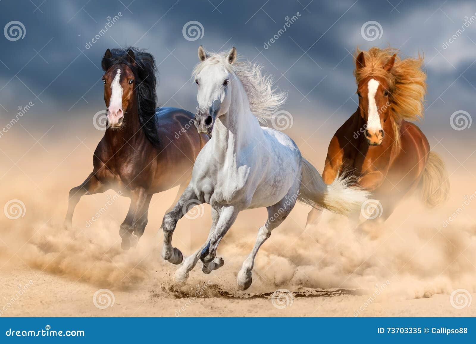Horse herdin desert