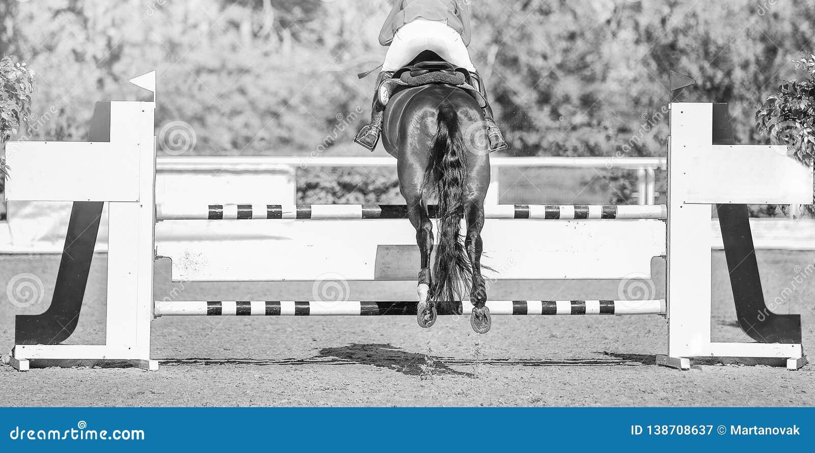 Horse Horizontal Black And White Banner For Website Header Poster Wallpaper Monochrome Design Stock Image Image Of Mammal Jockey 138708637