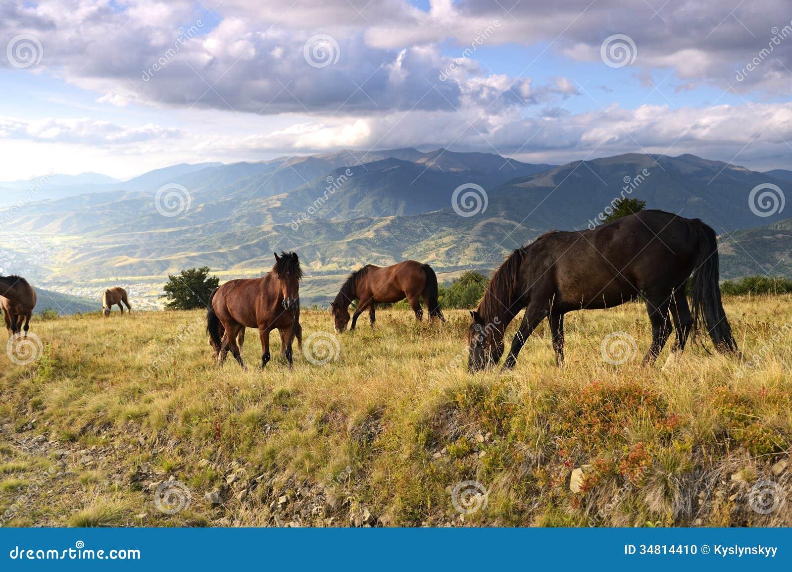 Horse Stock Pho...
