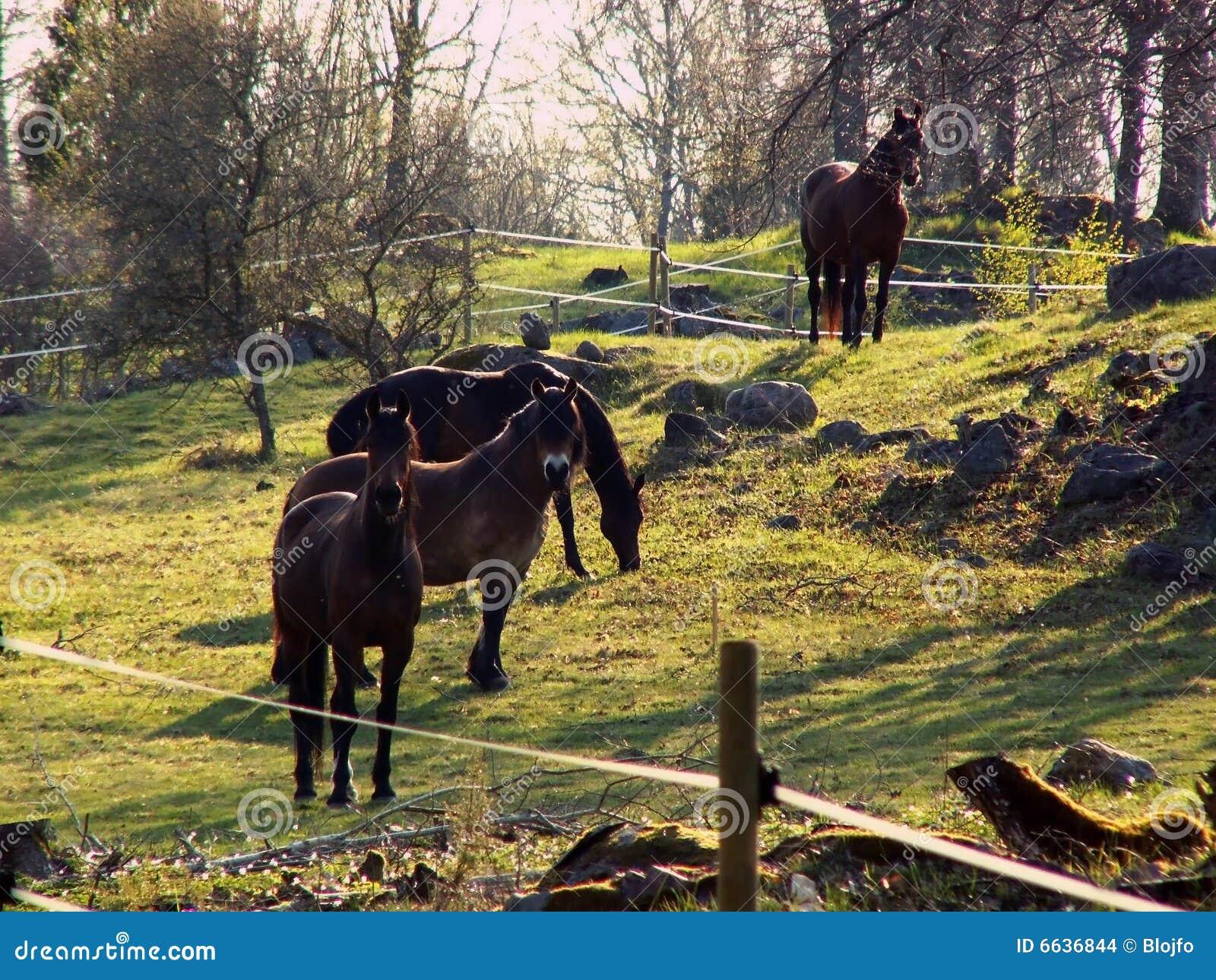 Horse in hycklinge