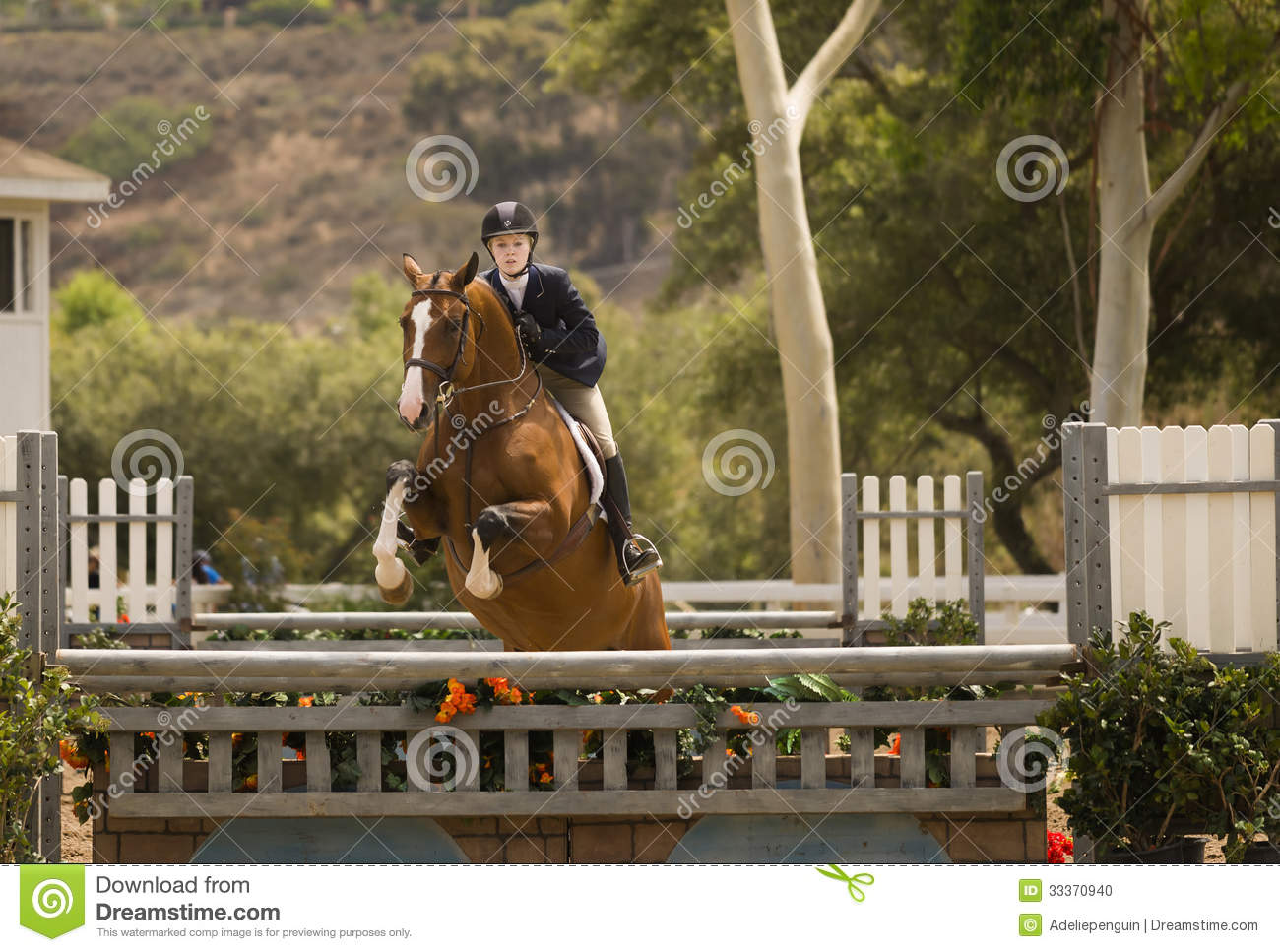 Horse Jumping Del Mar California Editorial Image Image