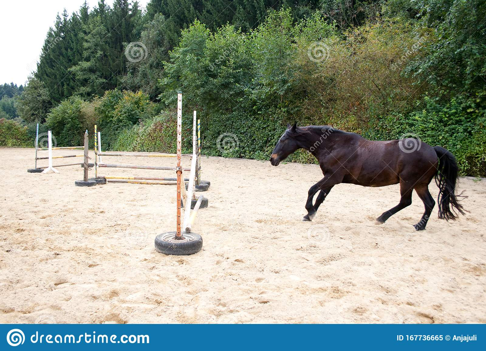 Horse Jumping Free Without Rider Horse Training With Fun Stock Image Image Of Summer Farm 167736665
