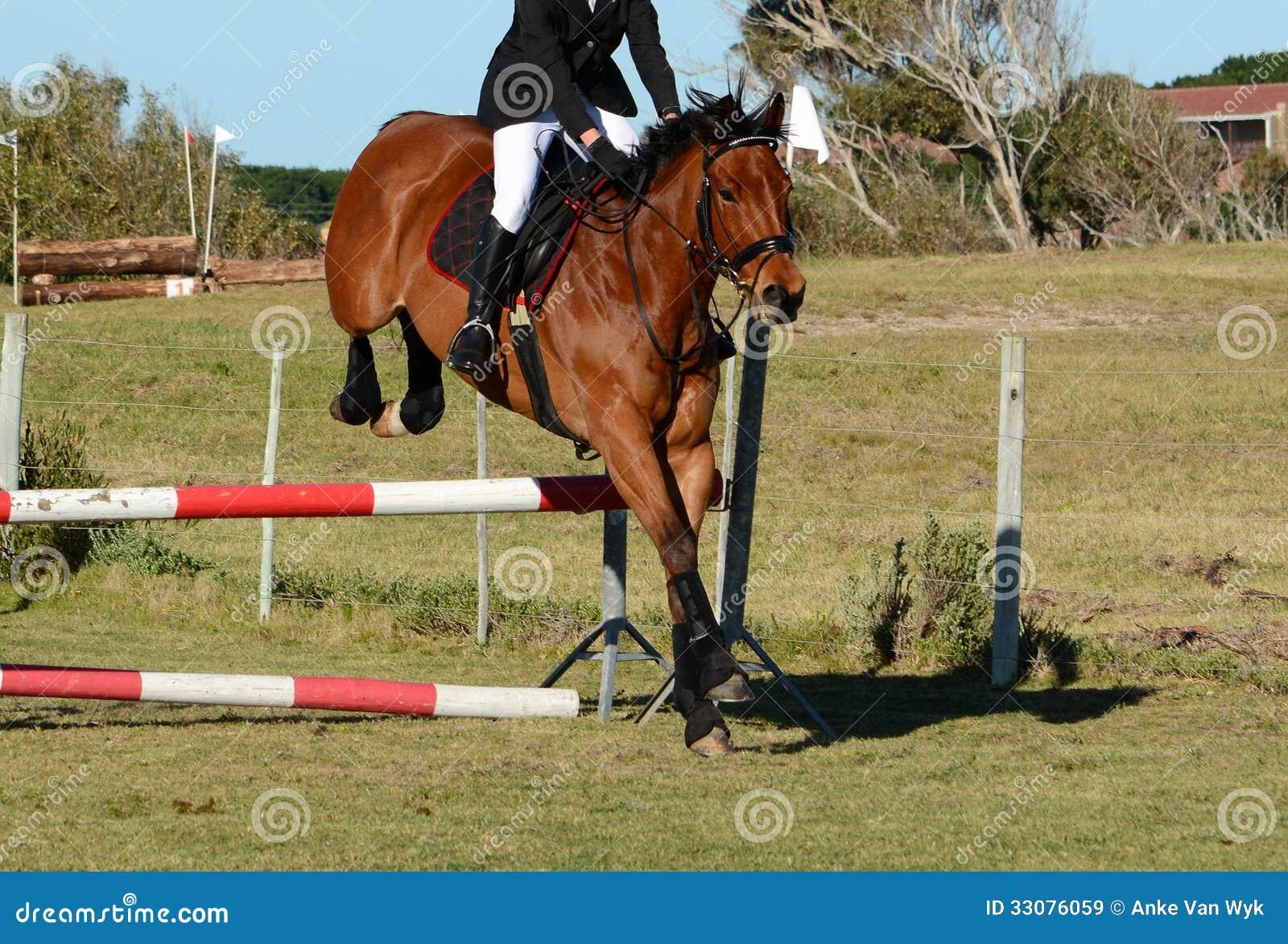 Horse jumping a jump stock image. Image of jumping, jump ...