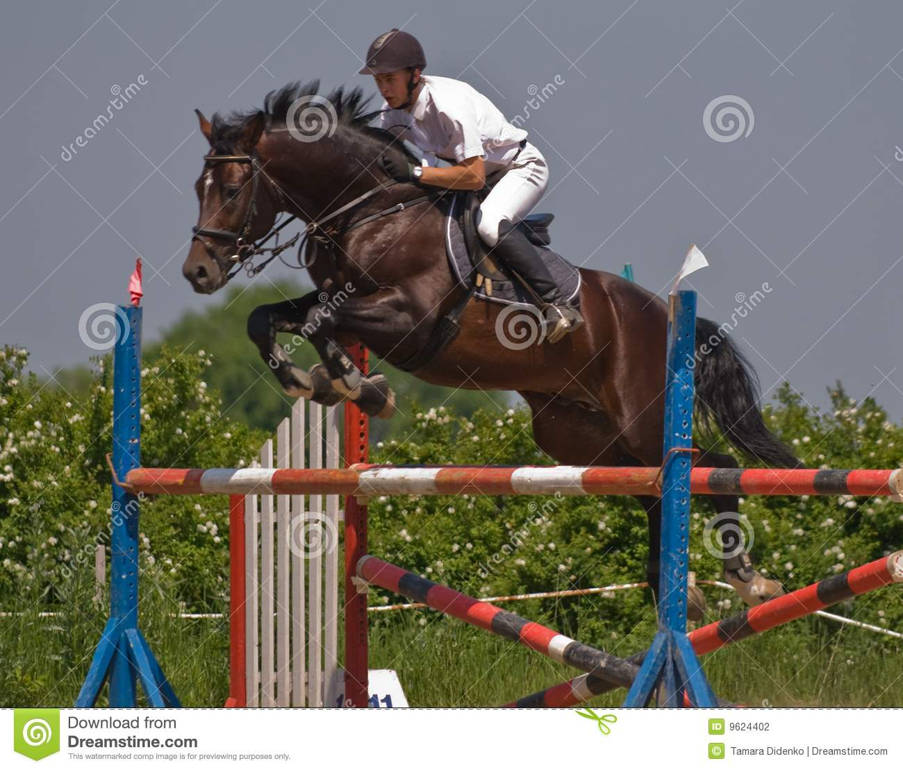 Horse Jumping Show Stock Photo Image Of Dark Saddle 9624402