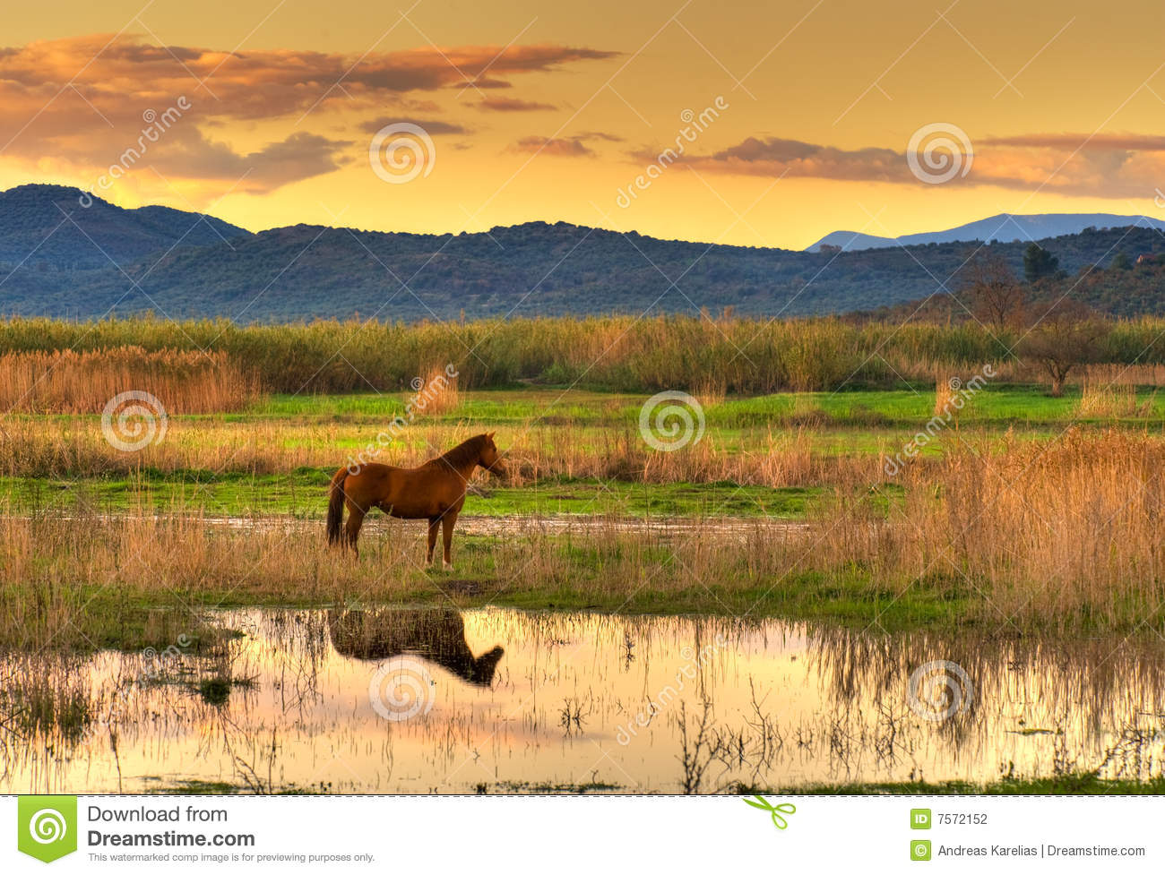 Download Horse in landscape stock photo. Image of calmness, marshland - 7572152