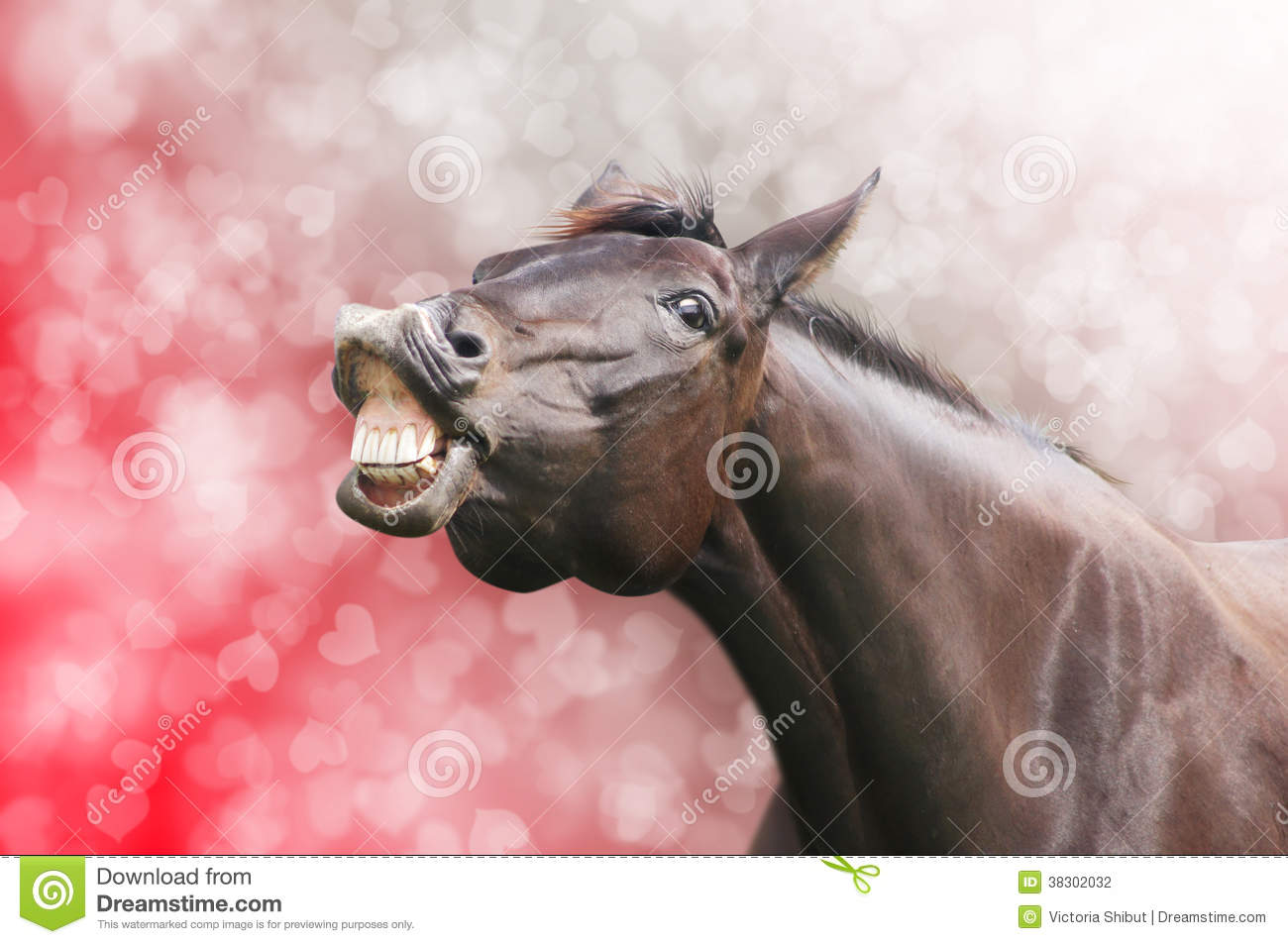 Horse laugh on heart holiday background