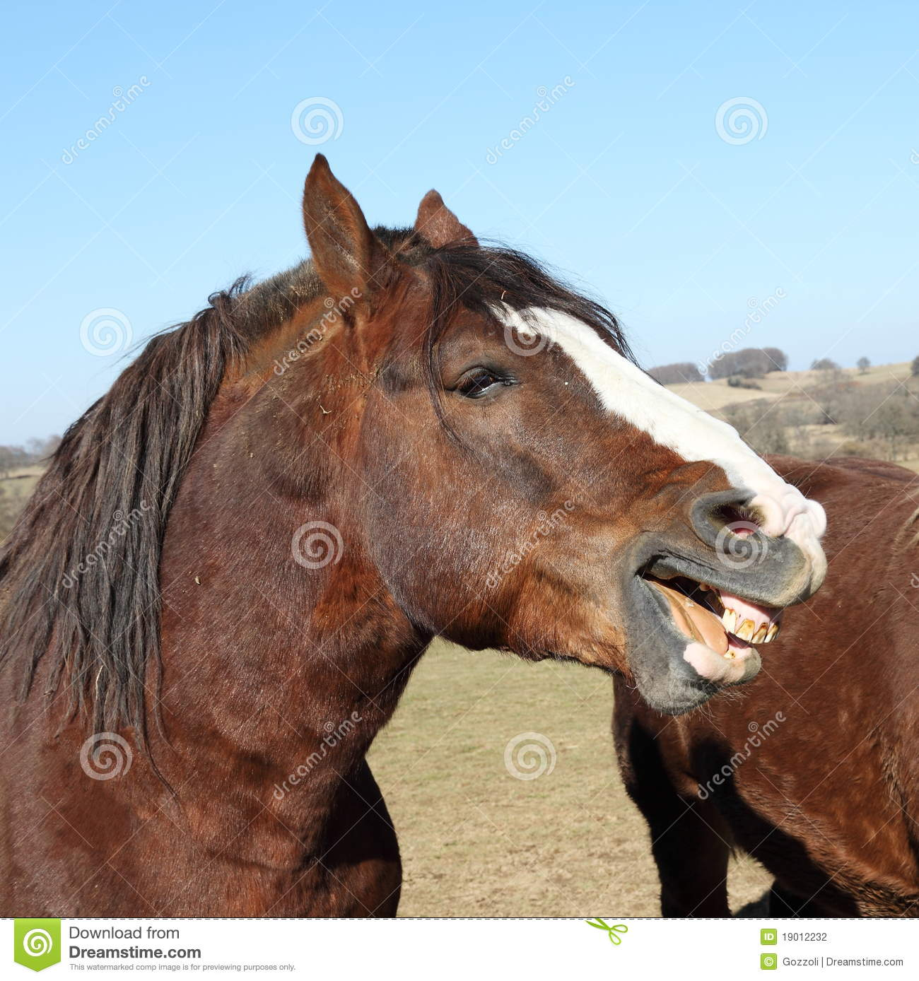 Horse Laughter