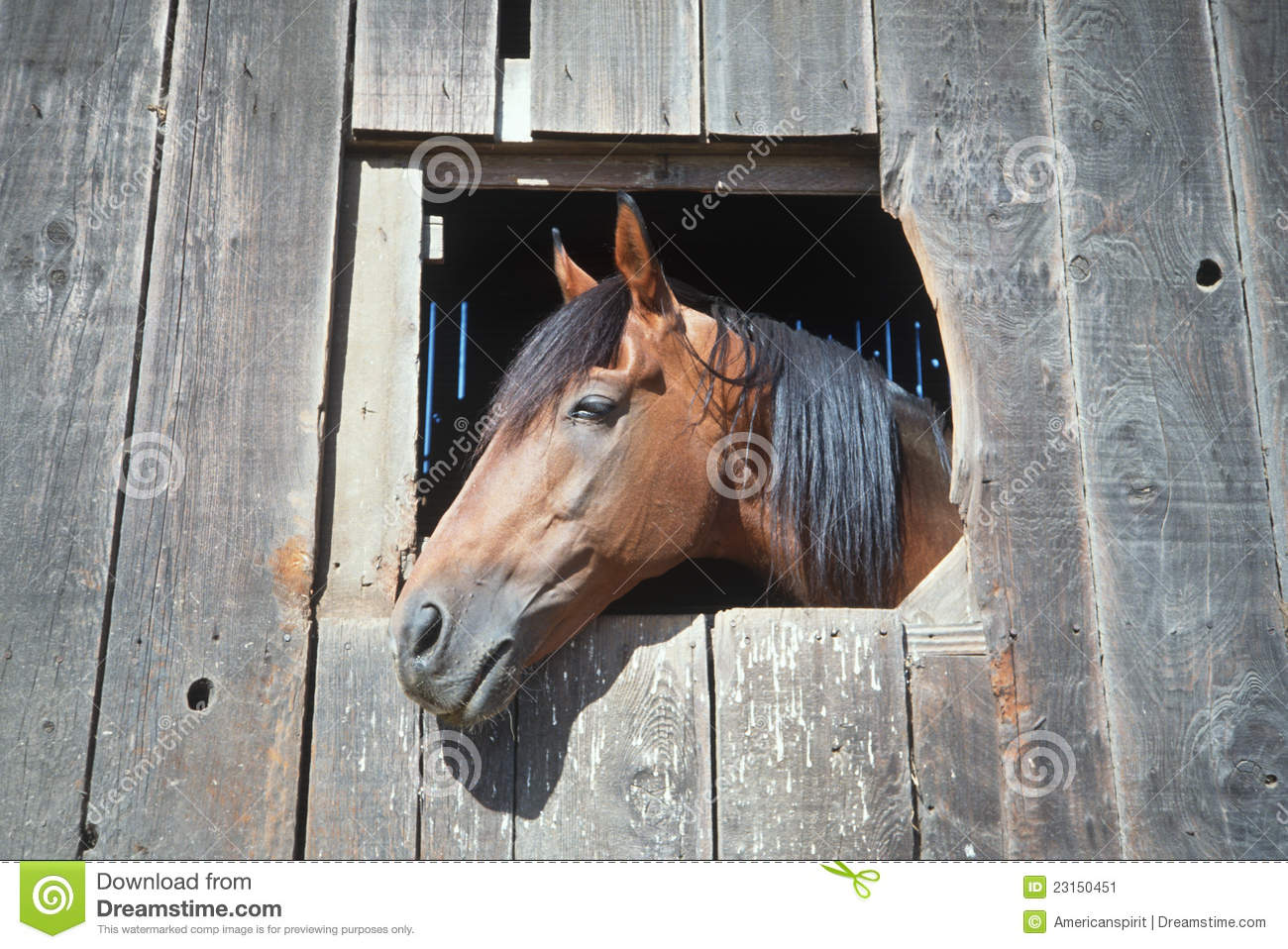Horse looking out of barn window stock image image 23150451 for Window horses