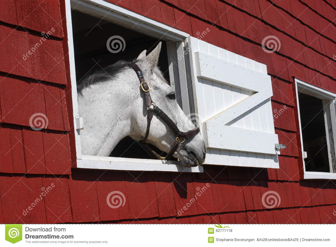 Horse looking out window royalty free stock image for Window horses