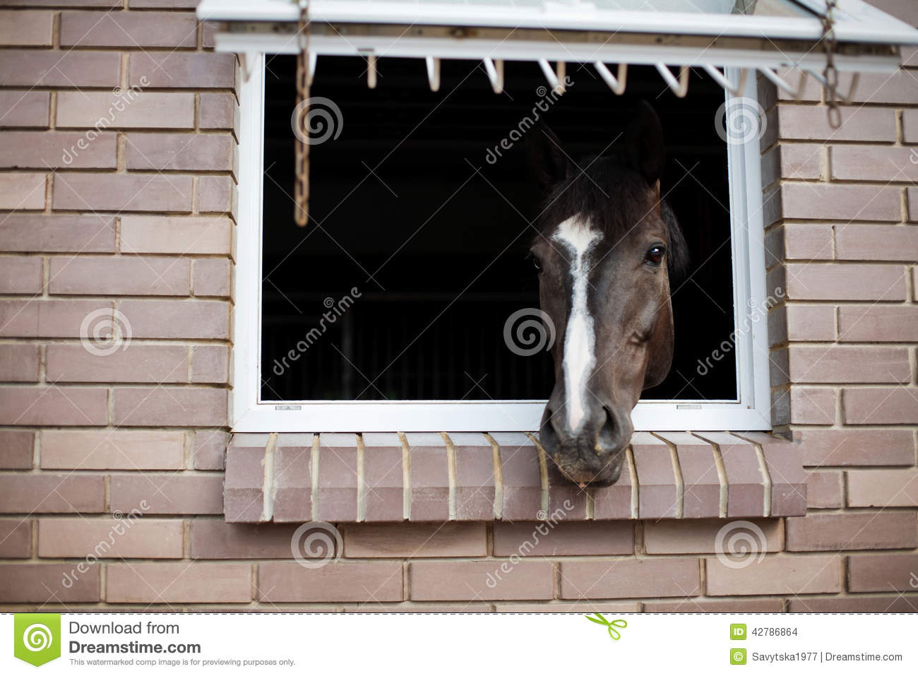 Horse stock photo image 42786864 for Window horses