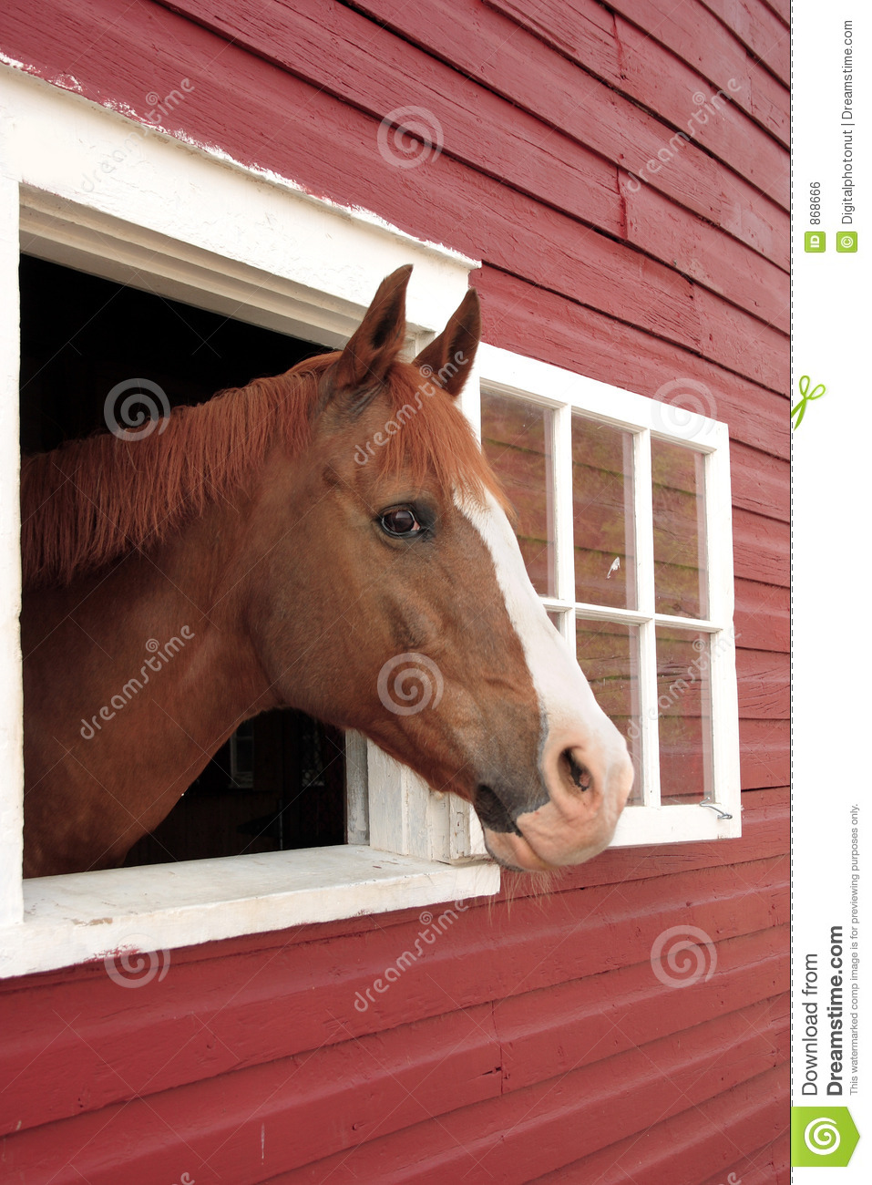 Horse looks out window royalty free stock image image for Window horses