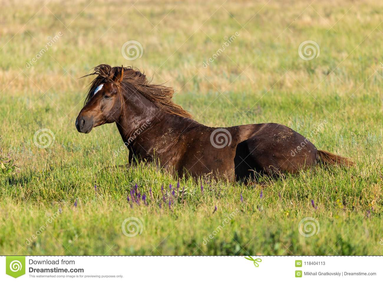 Horse lying in green grass on meadow