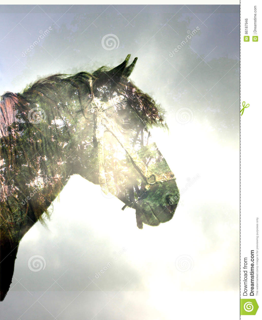 Horse In The Magic Forest Stock Photo Image Of Horse 86187946