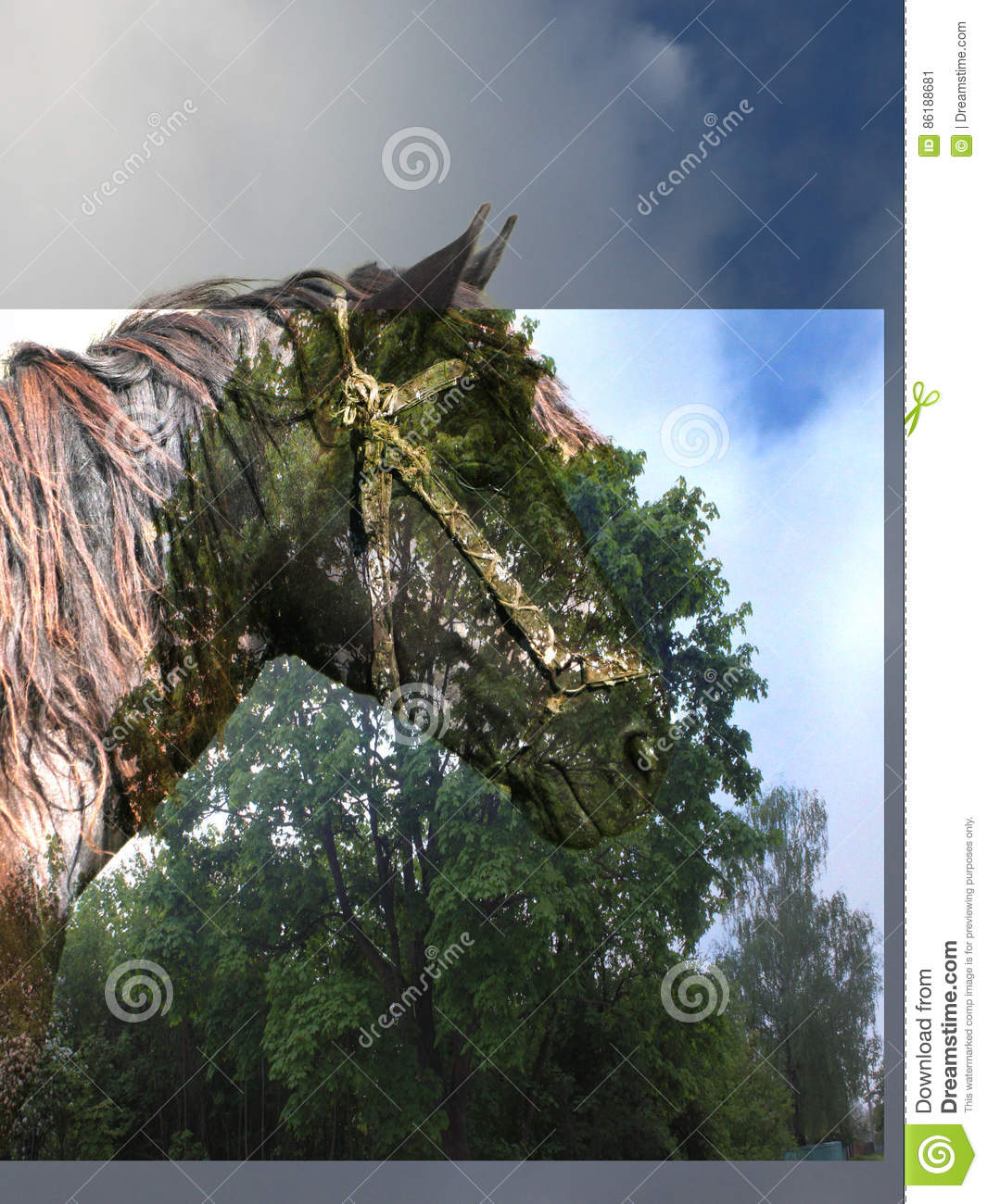 Horse In The Magic Forest Stock Image Image Of Beauty 86188681