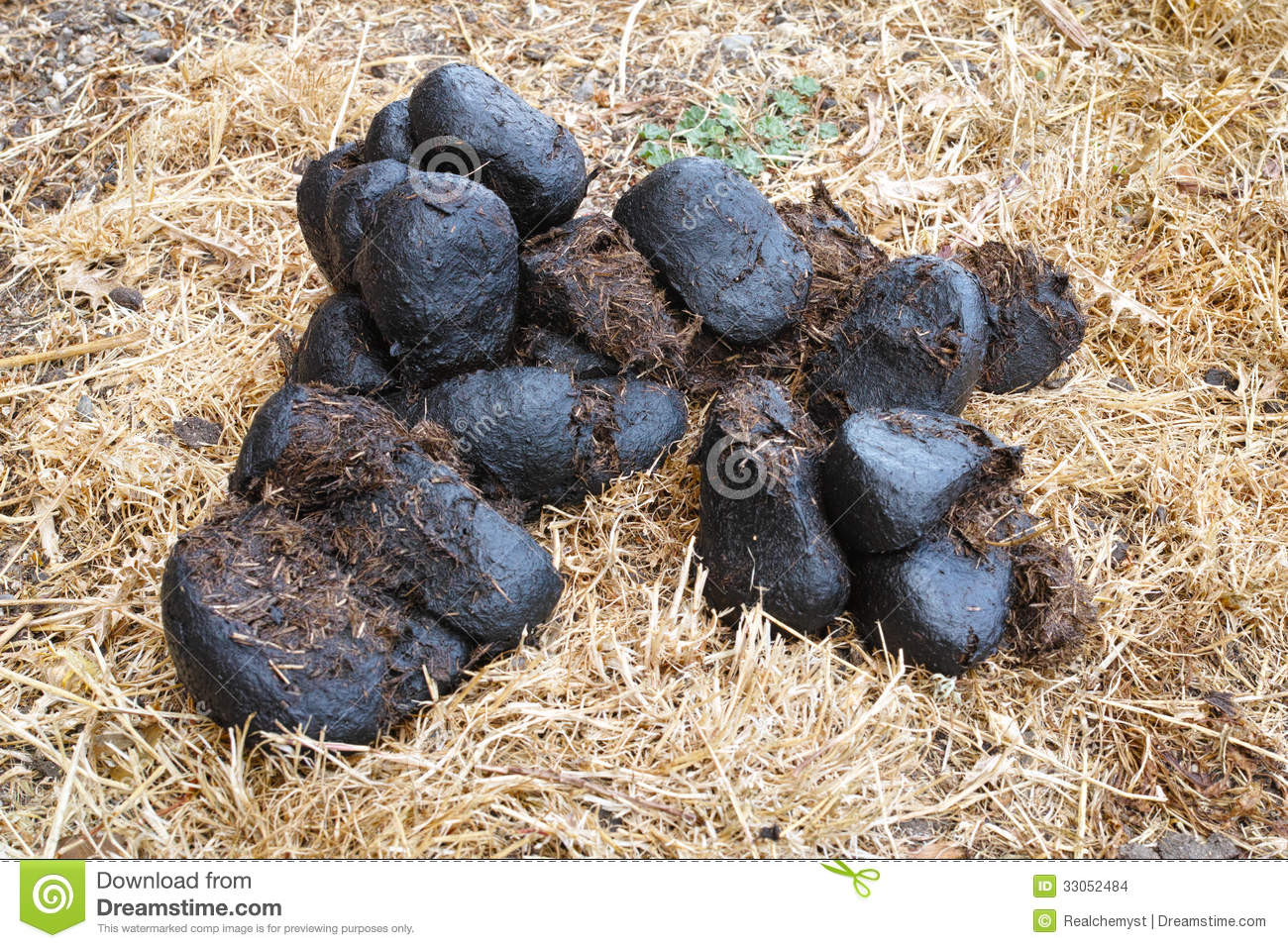 Horse manure stock photo. Image of outside, grass, feces ...