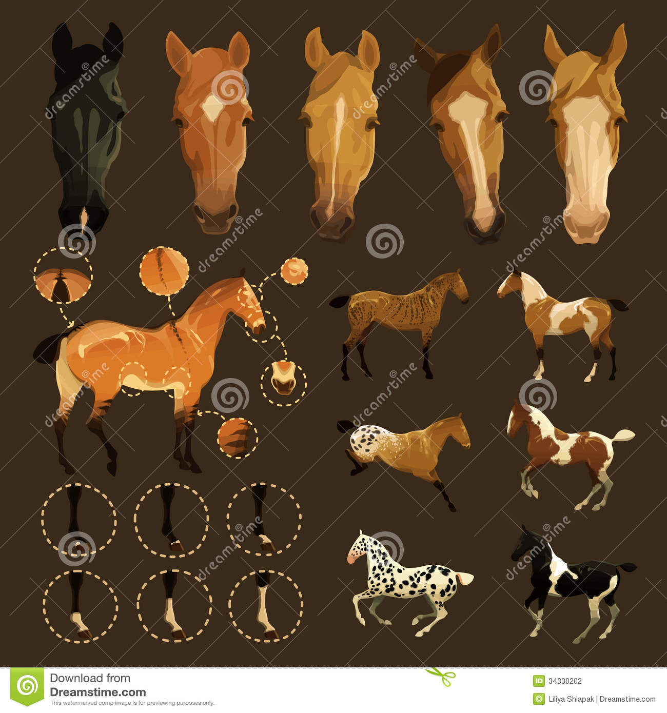 Horse coat colors and markings - photo#13