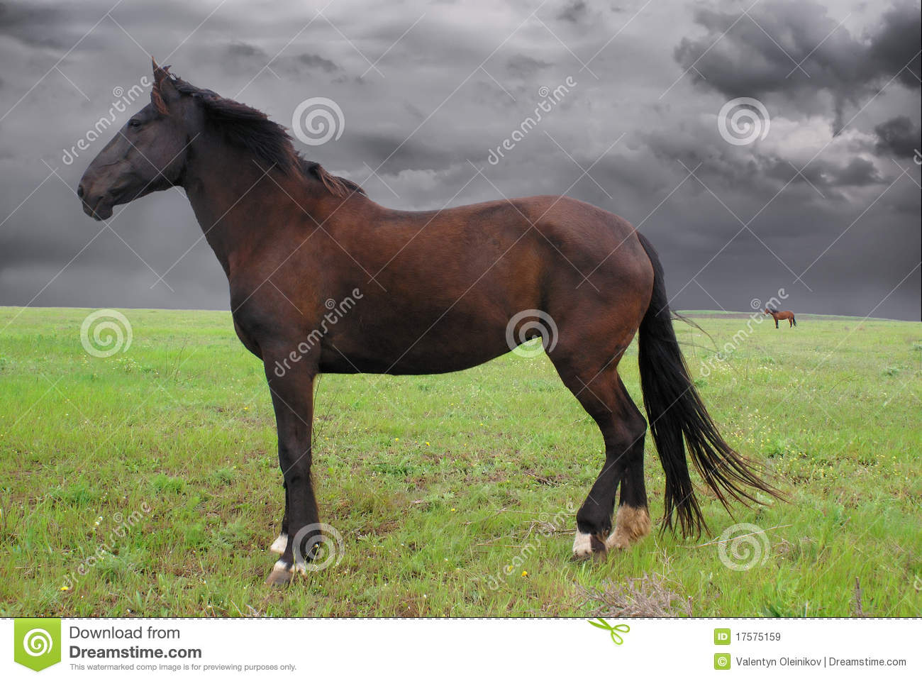 horse at meadow  stormy weather  royalty free stock images