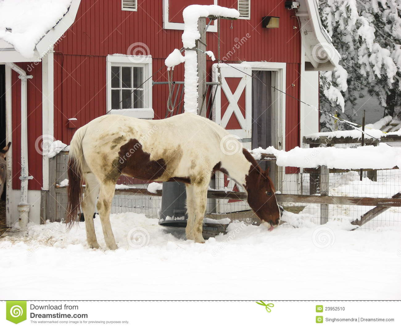 a horse at milwaukee zoo in winter season stock photo. Black Bedroom Furniture Sets. Home Design Ideas