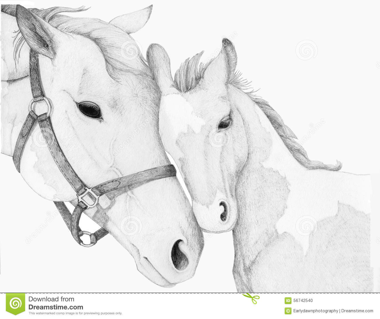Horse Mother Foal Drawing stock