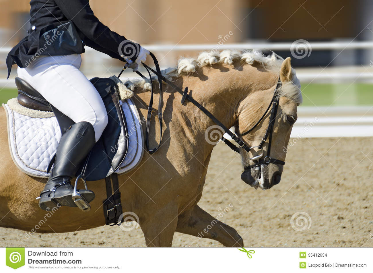 Horse in motion on a dressage area