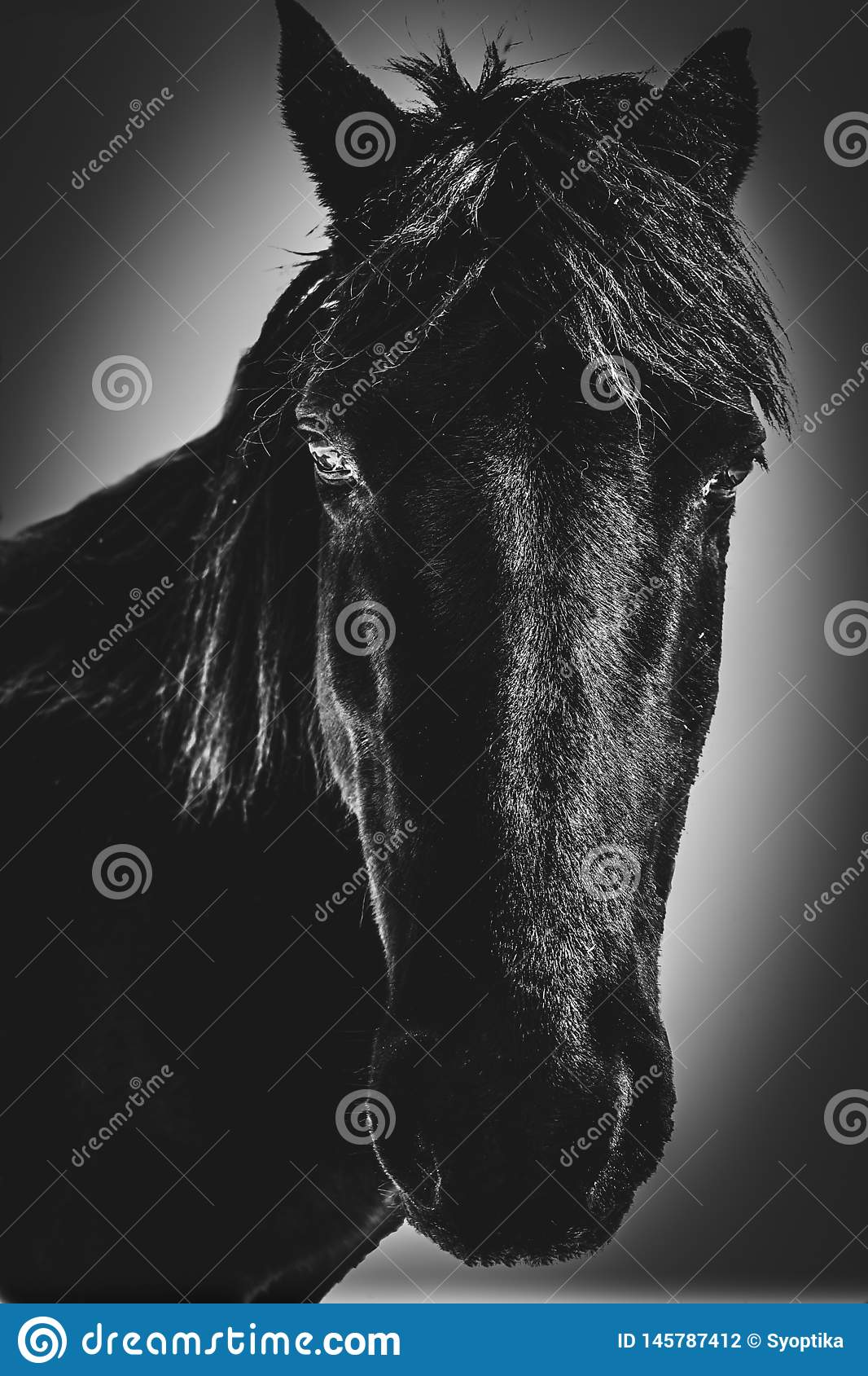 A Horse named Cole