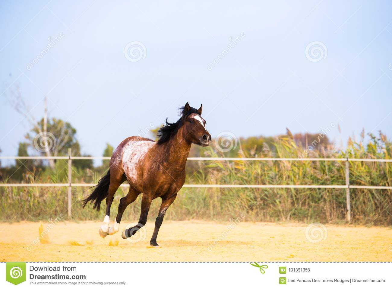 Horse On Nature Portrait Of A Horse Brown Horse Stock Photo Image Of Beauty Horse 101391958