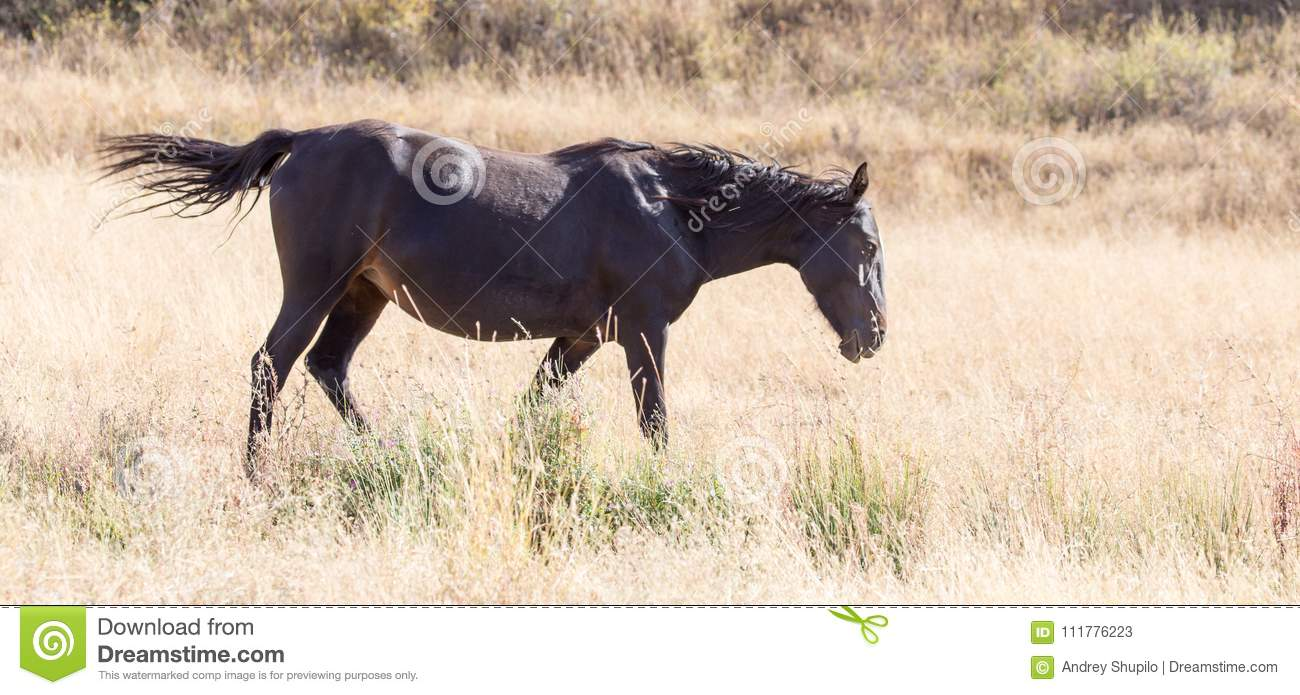 A horse in a pasture in the fall
