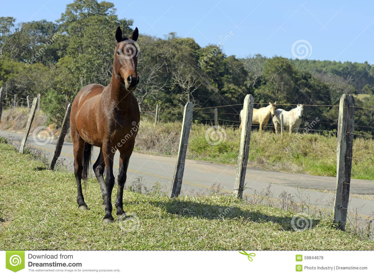 history of the horse equus caballus essay In this paper you will find out what the horse is, the history of the horse,  research paper: appaloosa introduction  (equus caballus) with four legs,.