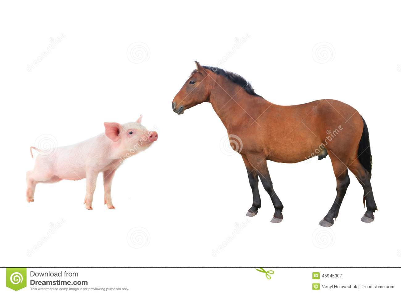 Horse And Pig Stock Photo Image 45945307