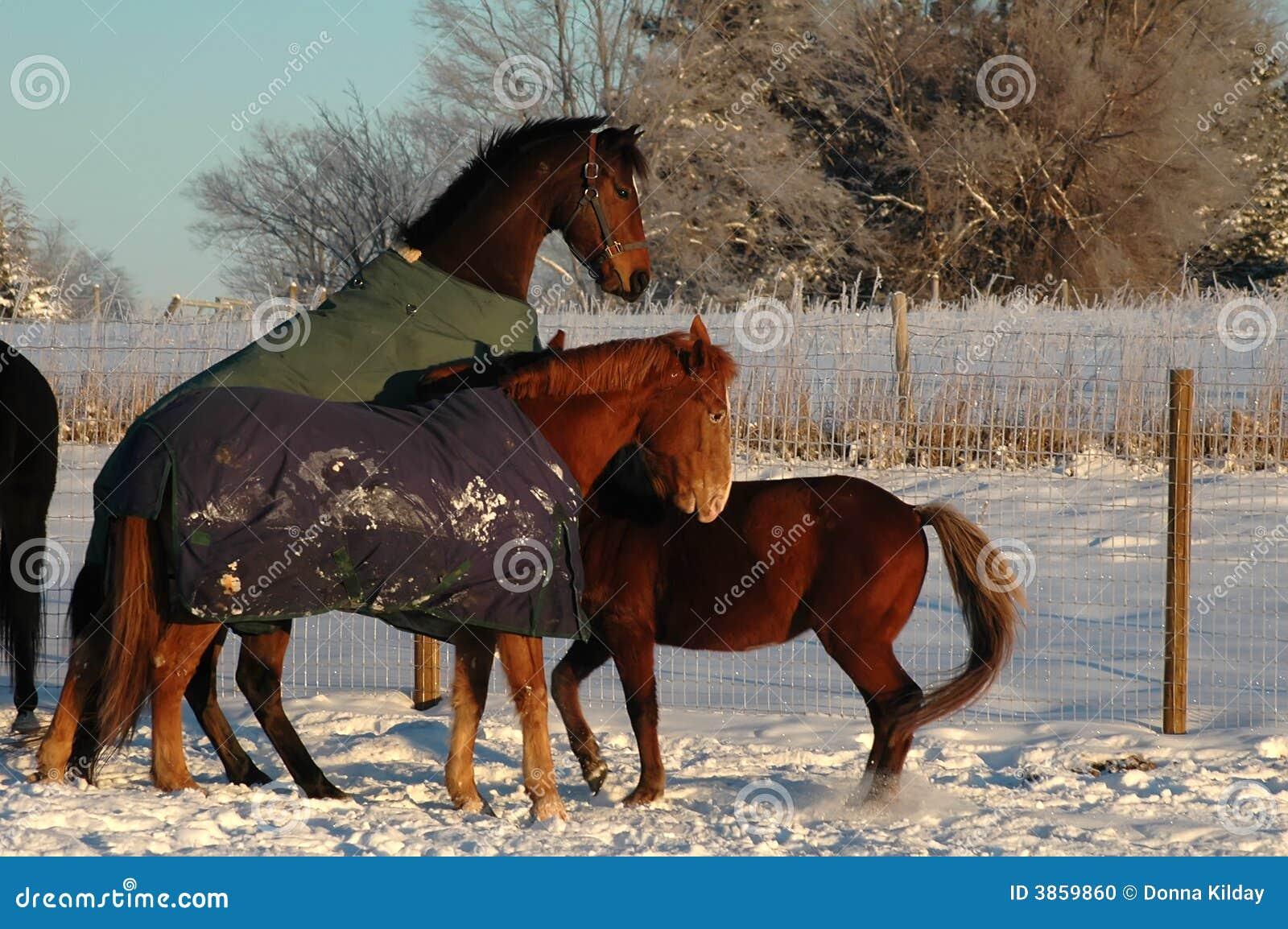 Horses Spiel