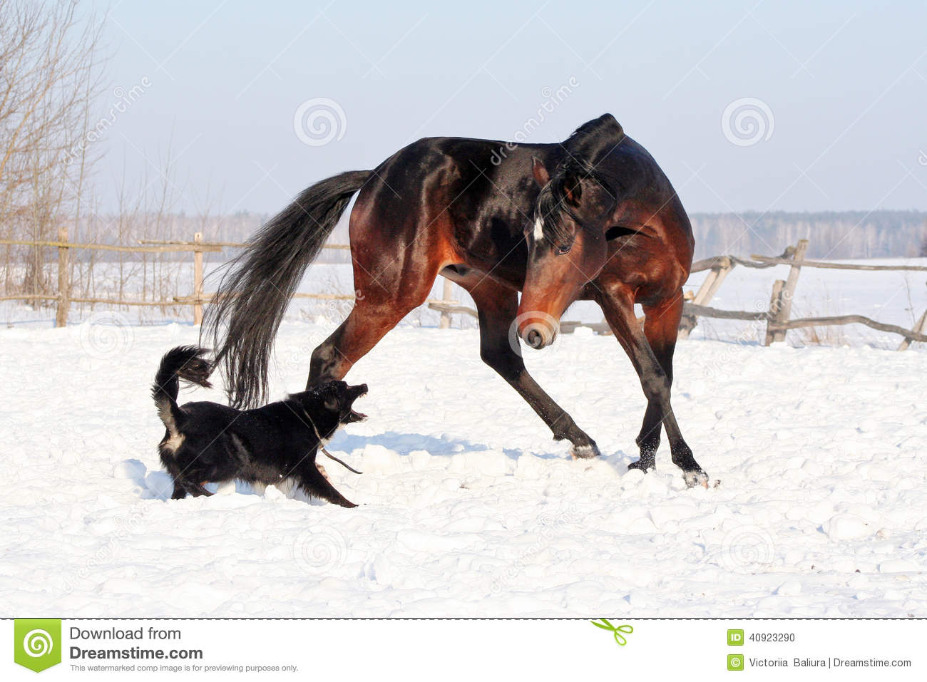 Horse playing with a dog