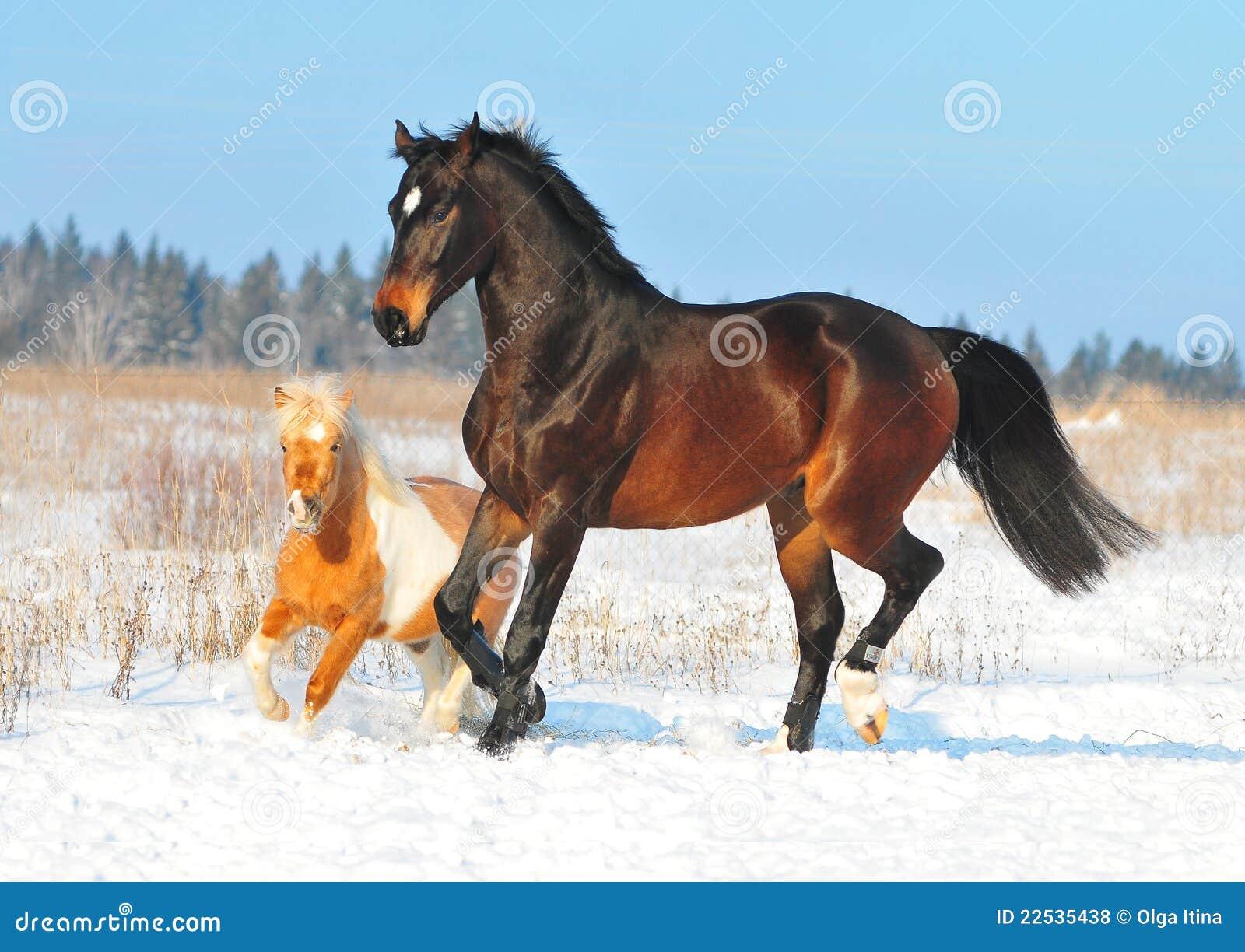 pony spiel