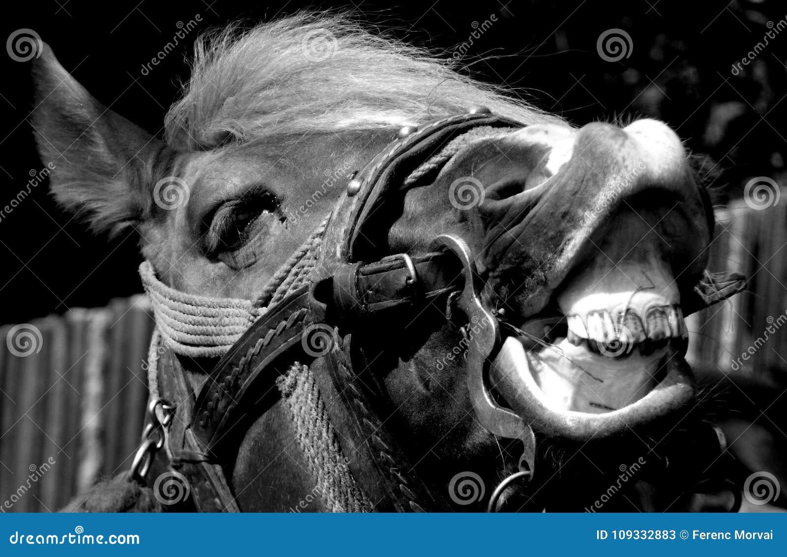 Horse portrait black and white