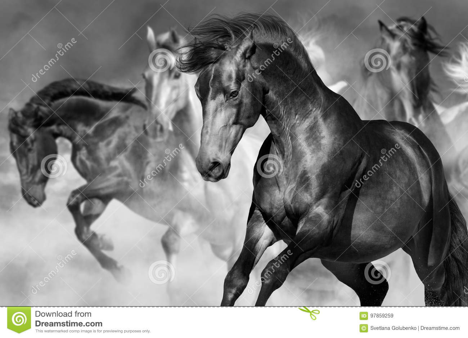 Horse portrait in motion