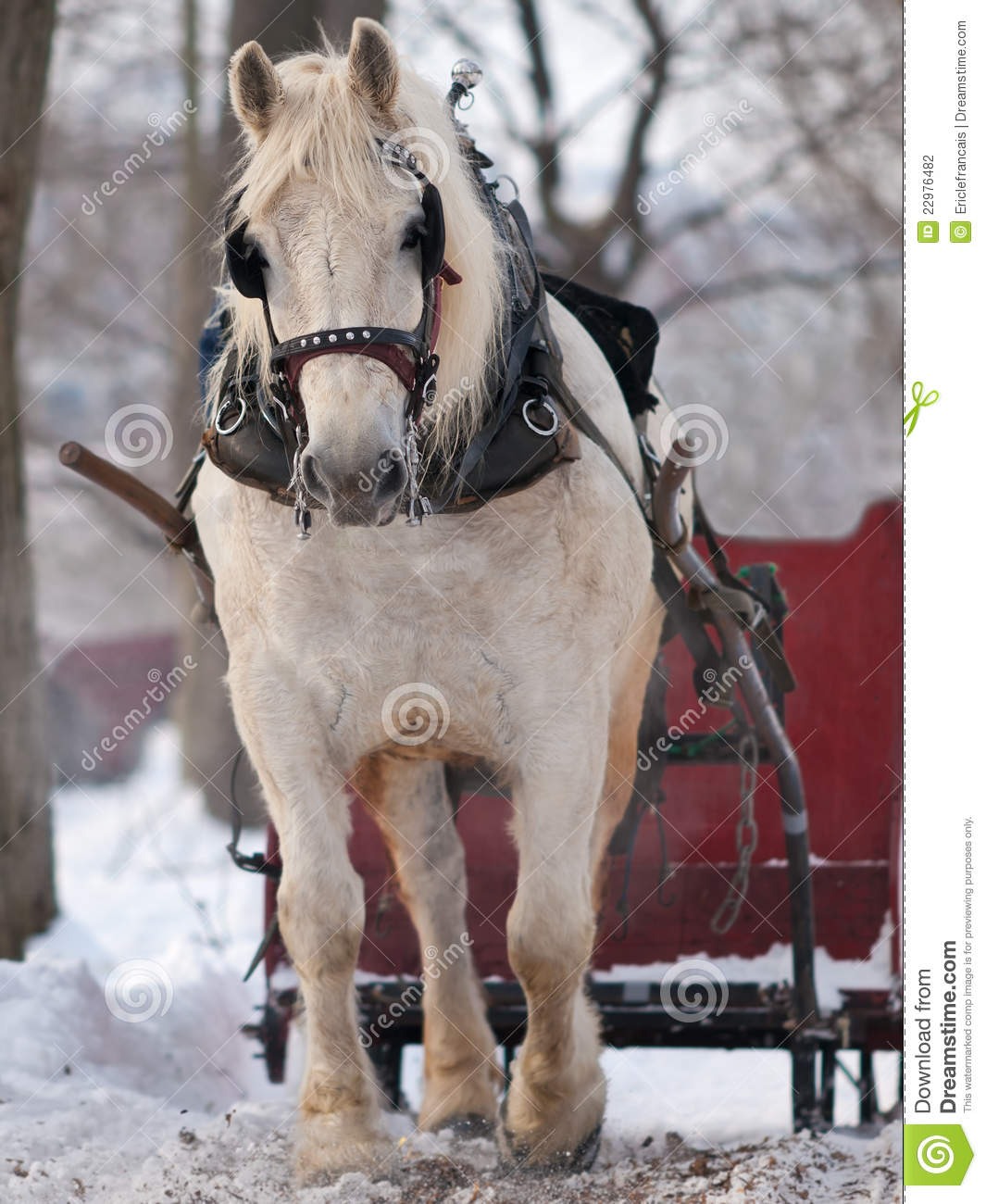Good   Wallpaper Horse Winter - horse-pulling-sleigh-winter-22976482  Snapshot_545458.jpg