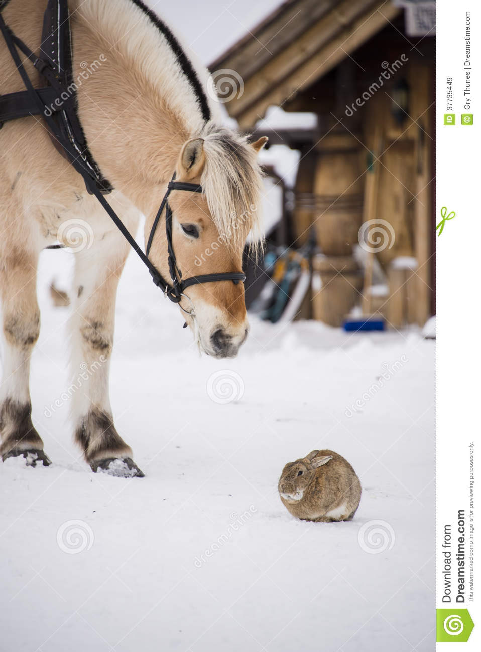 Horse And Rabbit Stock Image Image Of Snow Countryside