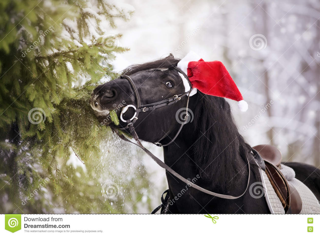 Horse In A Red Santa Claus Hat Eats Fir-tree Branches Stock Photo ... 2b1e95efba53