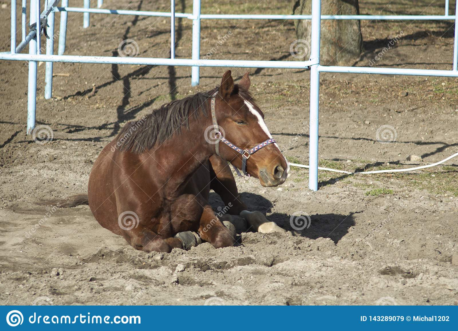 The horse is resting in the pasture.