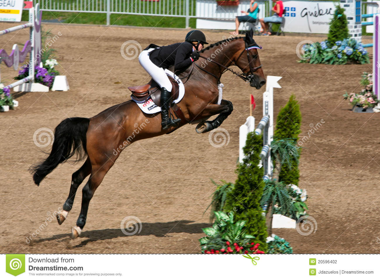 Show Jumping Horses Breeds Show Jumping Horse Breeds