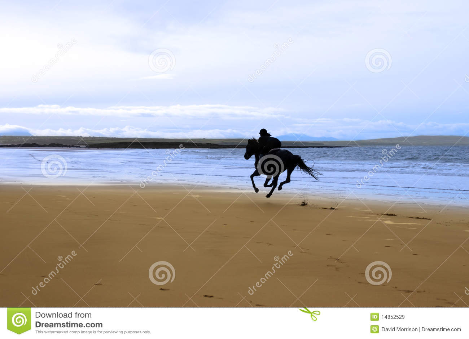 Horse and rider galloping along the coast