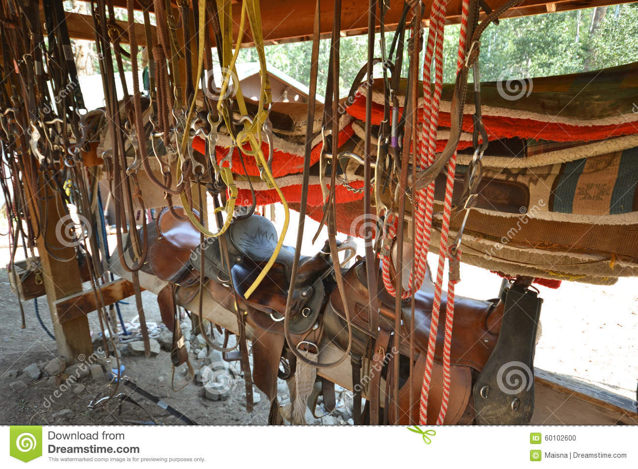 Horse Riding Equipment Stock Photo Image Of Outside 60102600
