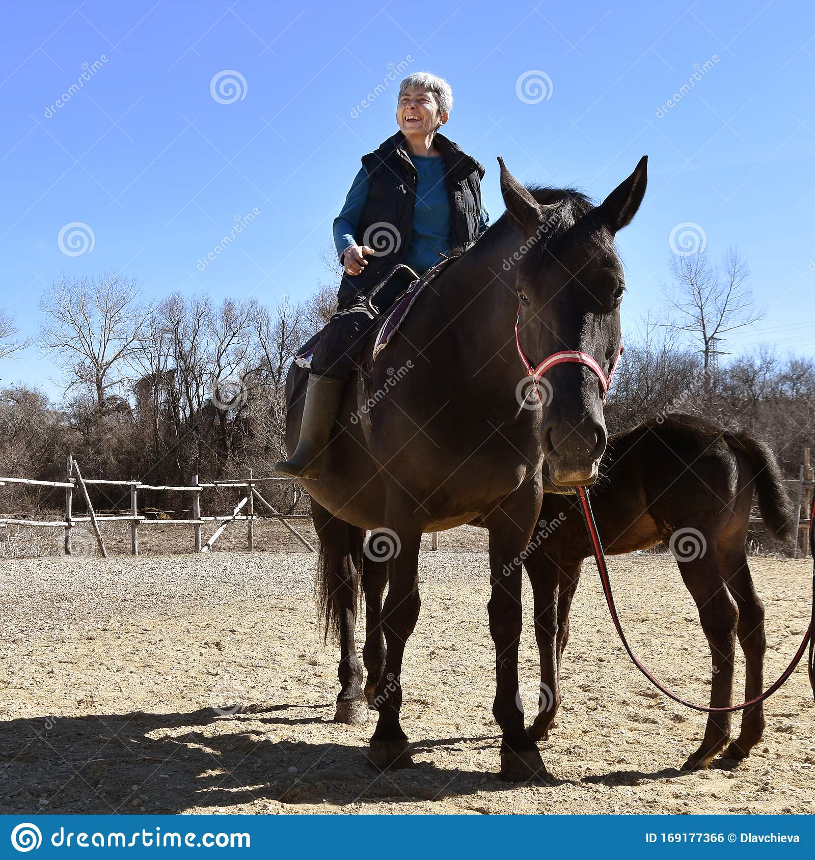 Horse Riding Therapy For Senior People Stock Photo Image Of Happy Equestrian 169177366